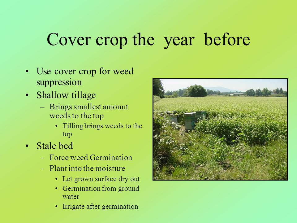 Cover crop the year before