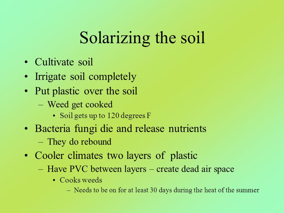 Solarizing the soil Cultivate soil Irrigate soil completely