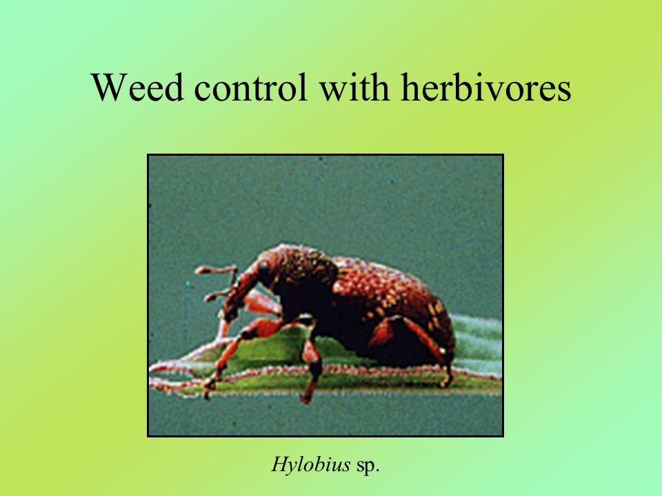 Weed control with herbivores