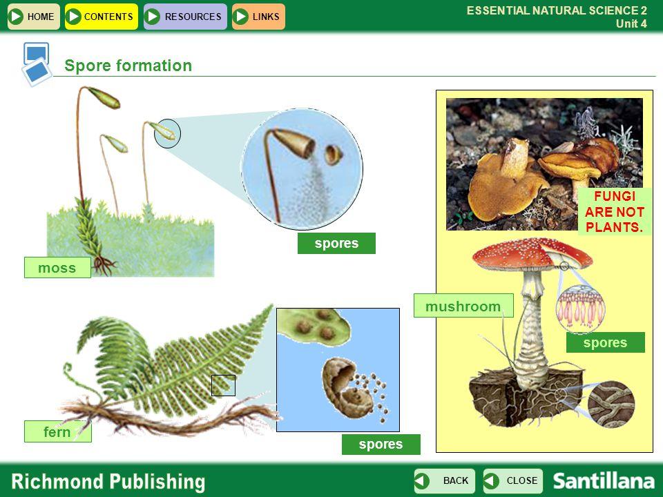 Spore formation moss mushroom fern FUNGI ARE NOT PLANTS. spores spores