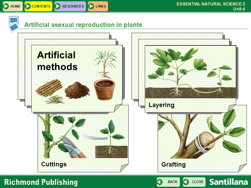 Artificial methods Artificial asexual reproduction in plants Layering