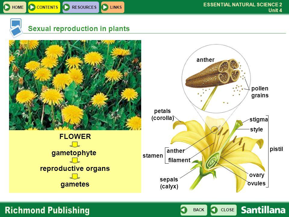 FLOWER gametophyte reproductive organs gametes