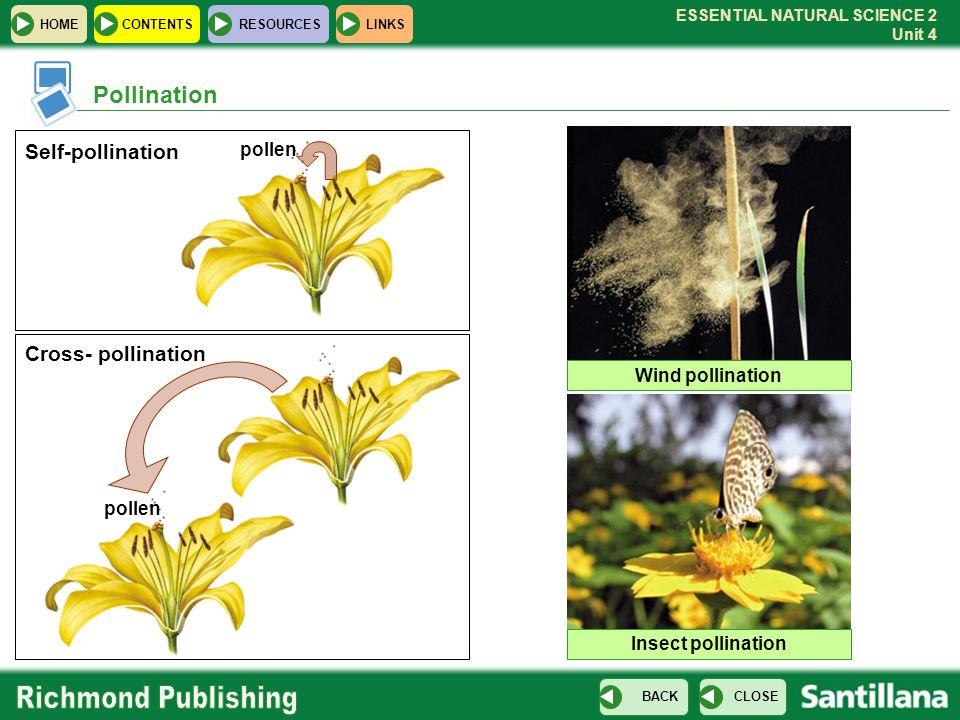 Pollination Self-pollination Cross- pollination pollen