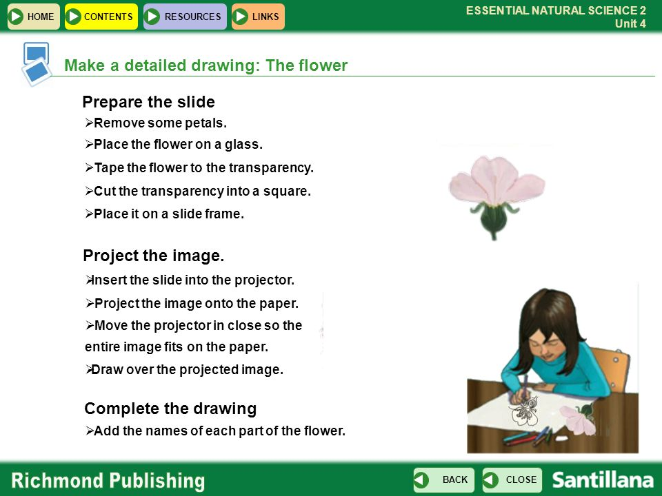 Prepare the slide Project the image.