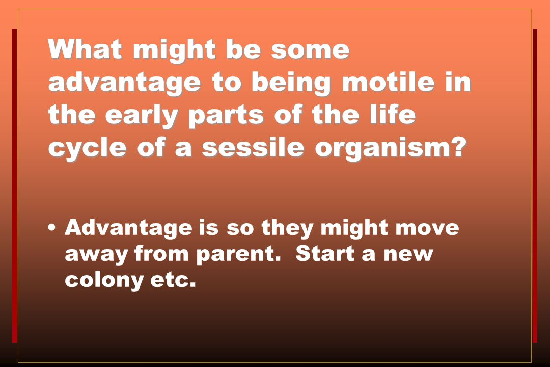 What might be some advantage to being motile in the early parts of the life cycle of a sessile organism
