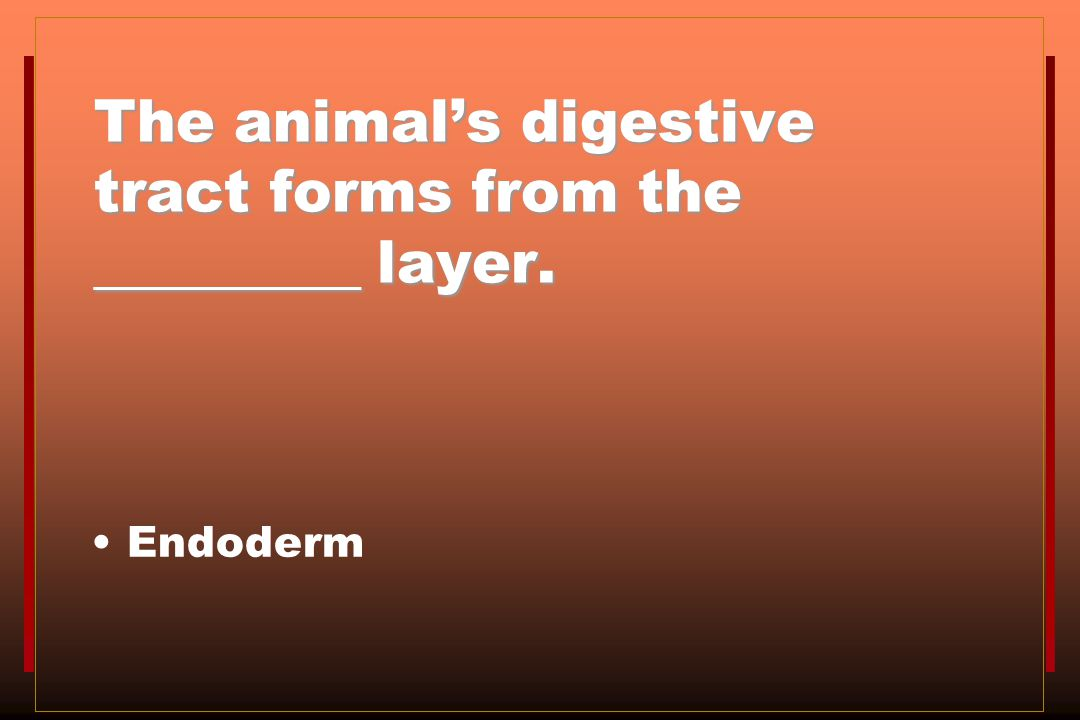 The animal's digestive tract forms from the _________ layer.