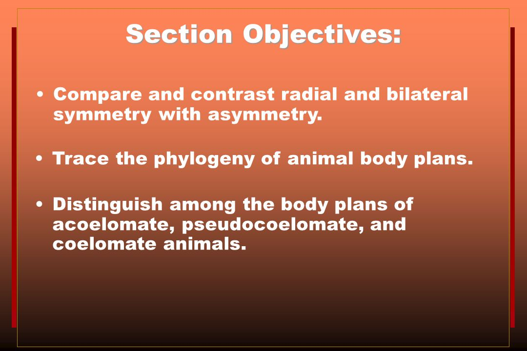 Section Objectives: Compare and contrast radial and bilateral symmetry with asymmetry. Trace the phylogeny of animal body plans.