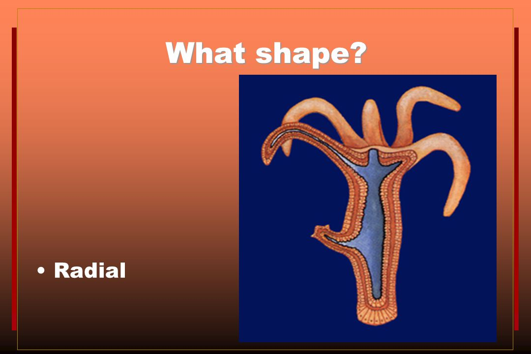 What shape Radial
