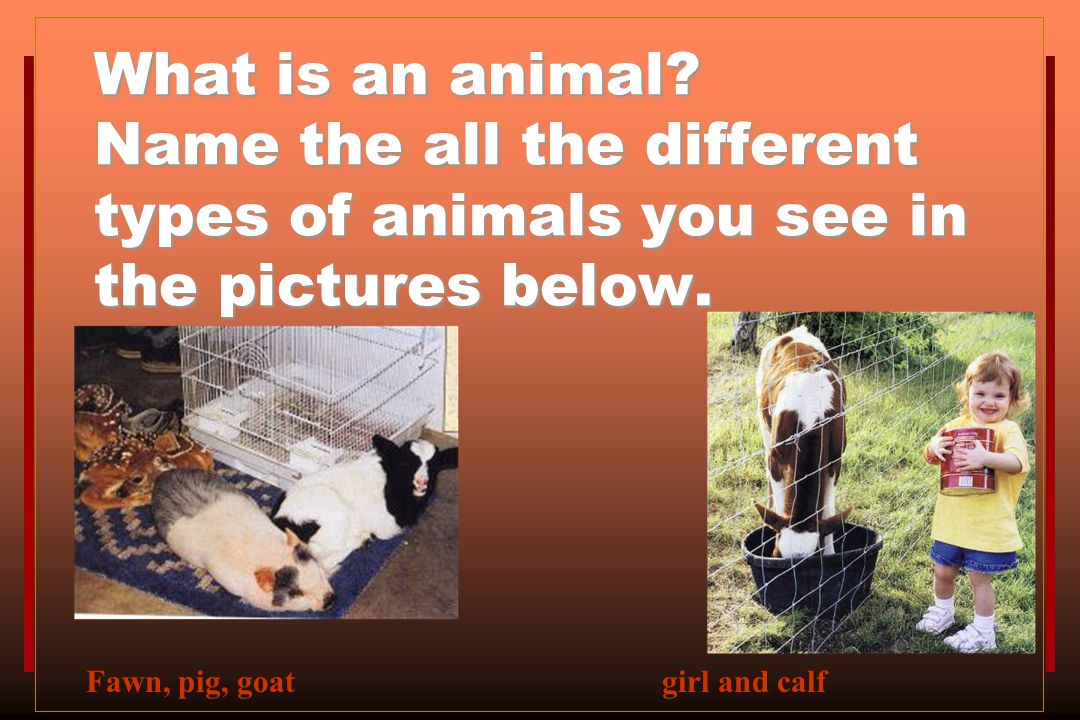 What is an animal Name the all the different types of animals you see in the pictures below.