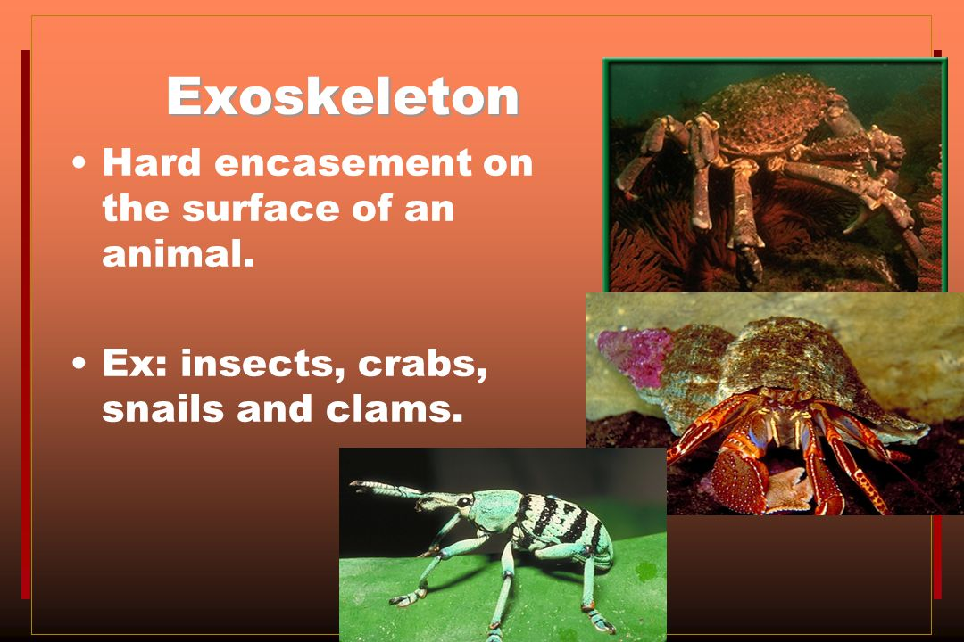 Exoskeleton Hard encasement on the surface of an animal.