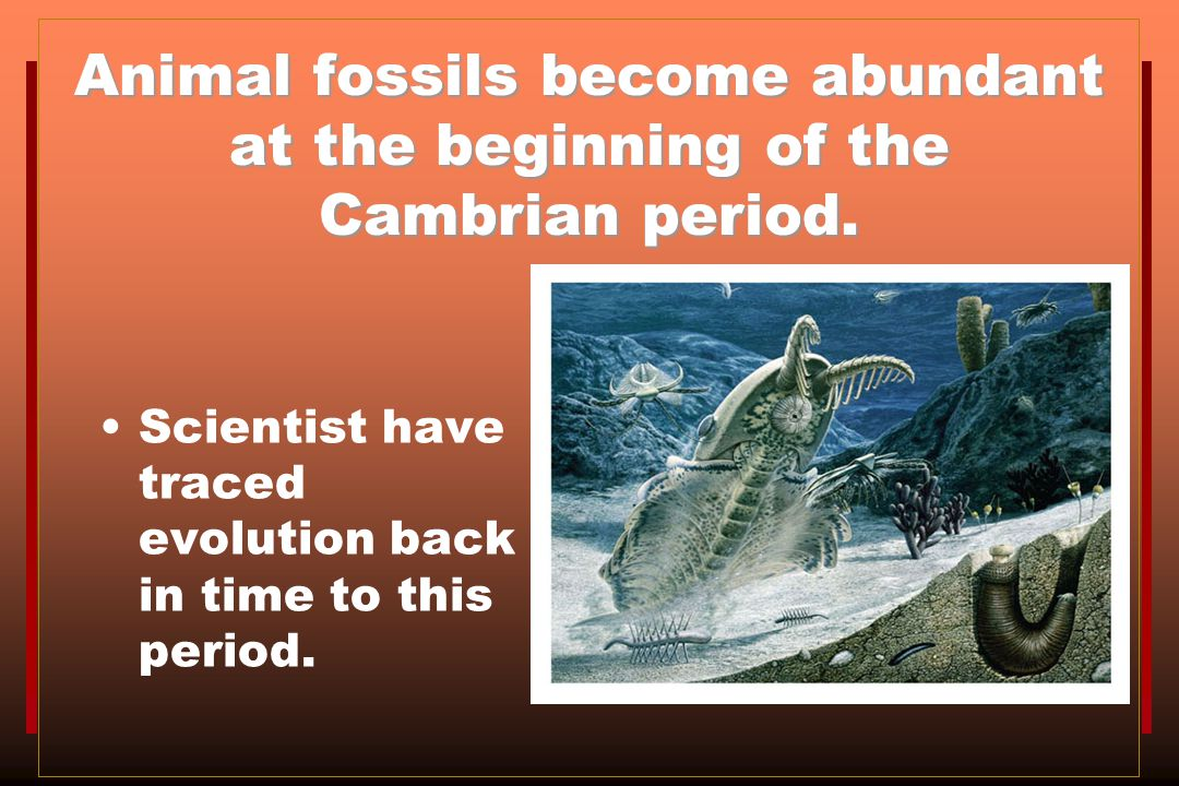 Animal fossils become abundant at the beginning of the Cambrian period.