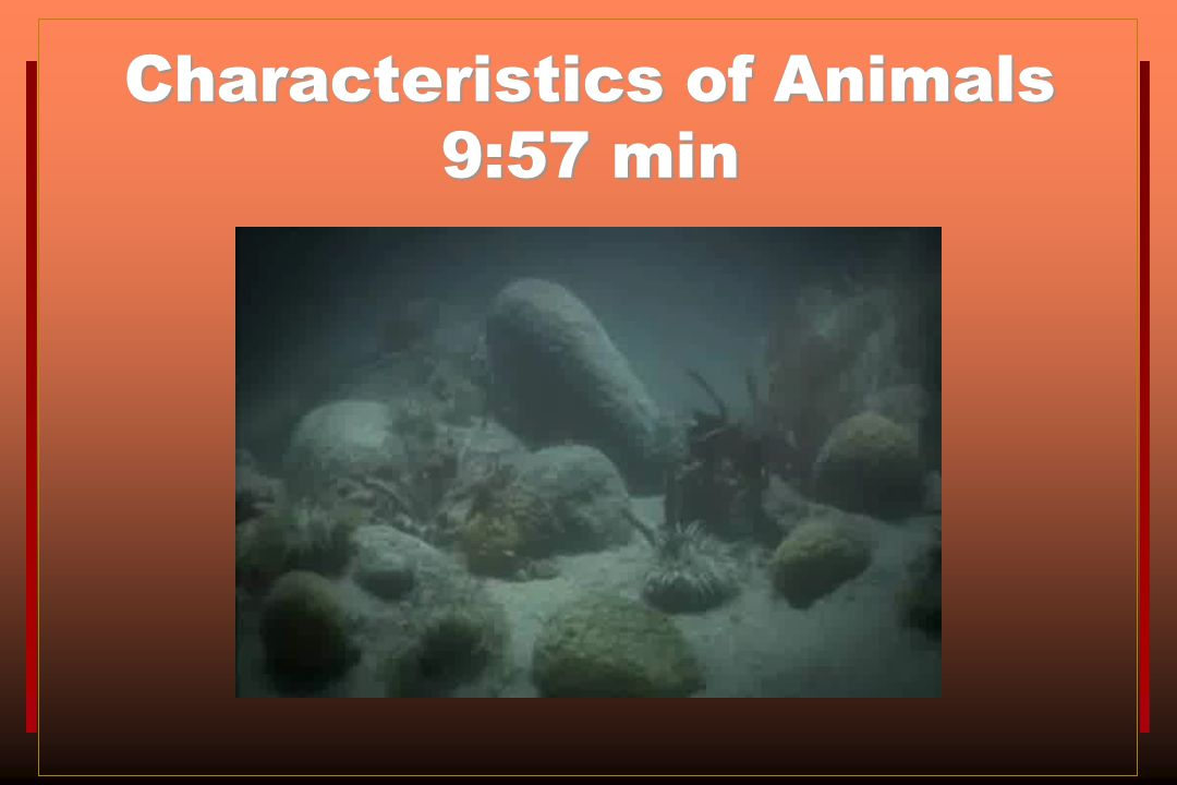 Characteristics of Animals 9:57 min
