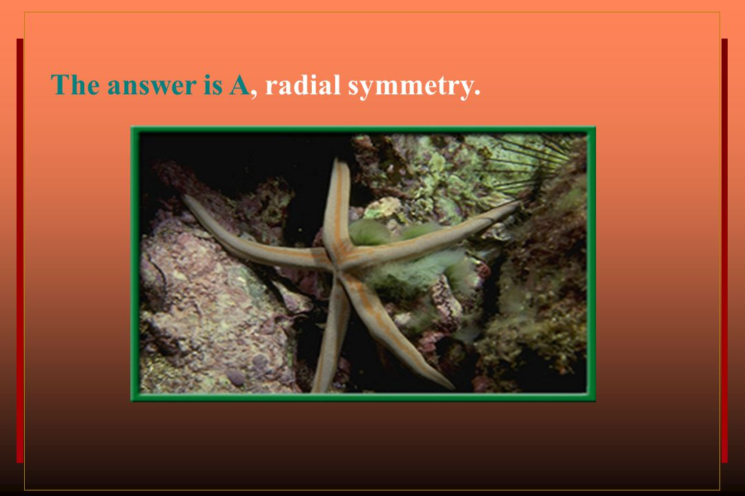 The answer is A, radial symmetry.
