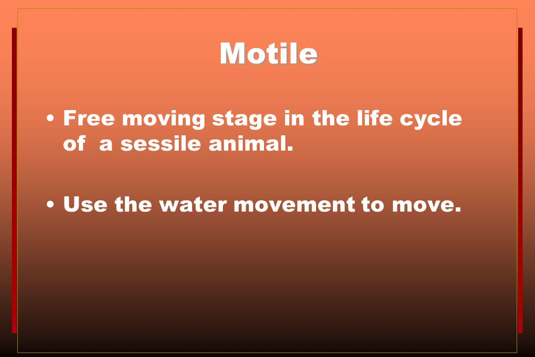 Motile Free moving stage in the life cycle of a sessile animal.