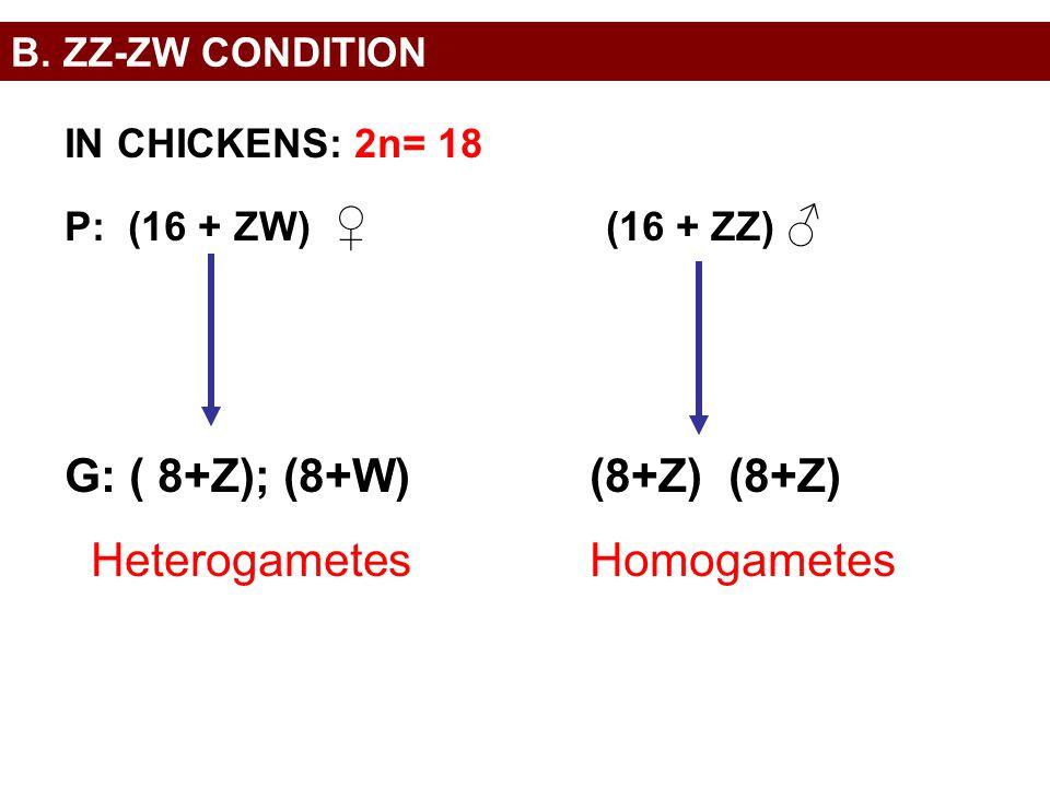 Heterogametes Homogametes