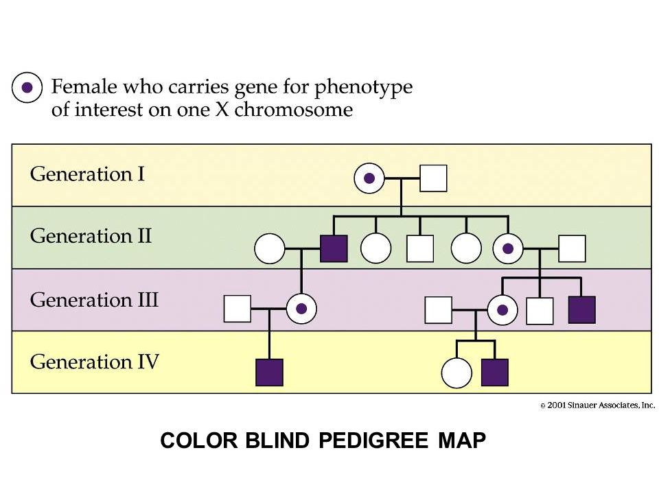 COLOR BLIND PEDIGREE MAP