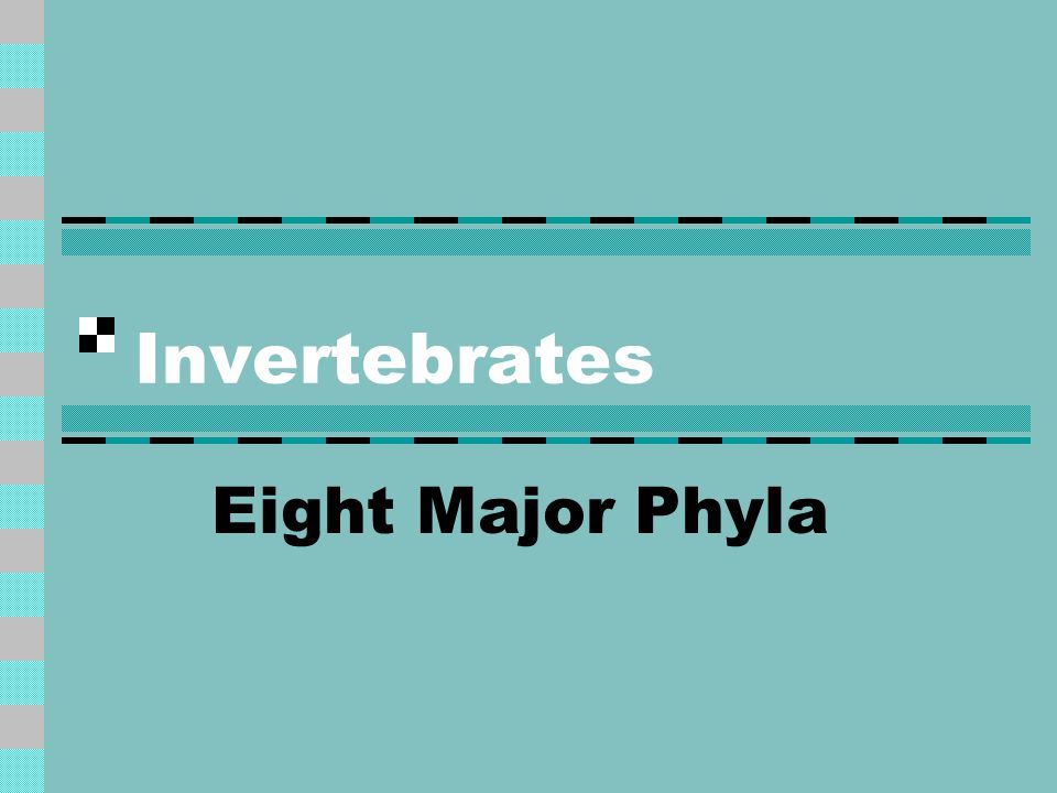 Invertebrates Eight Major Phyla