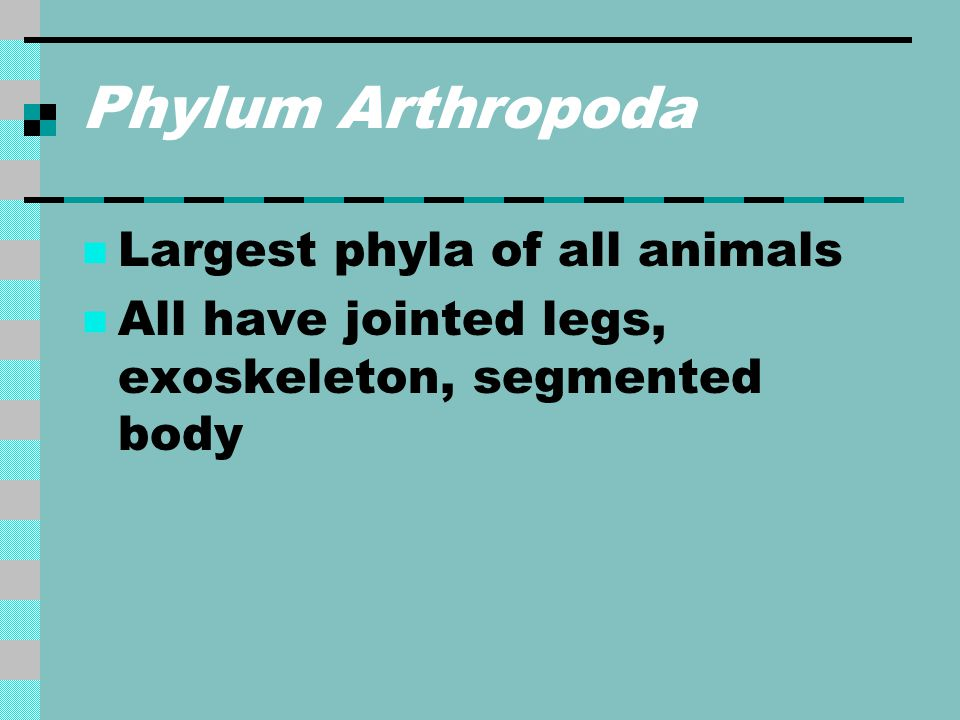 Phylum Arthropoda Largest phyla of all animals