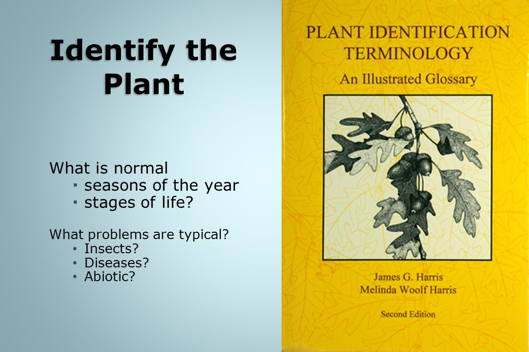 Identify the Plant What is normal seasons of the year stages of life