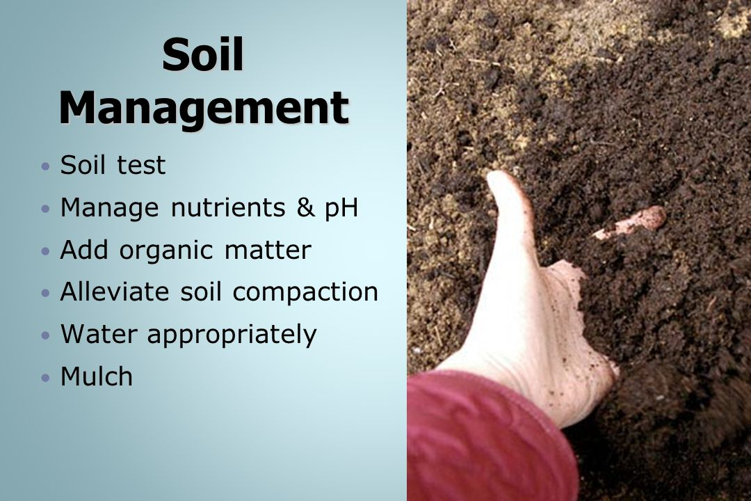 Soil Management Soil test Manage nutrients & pH Add organic matter