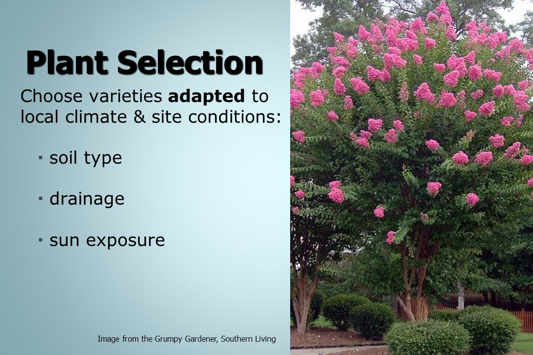 Plant Selection Choose varieties adapted to