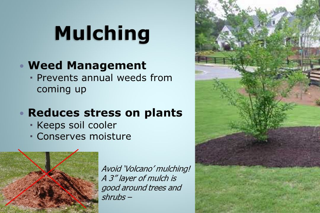 Mulching Weed Management Reduces stress on plants