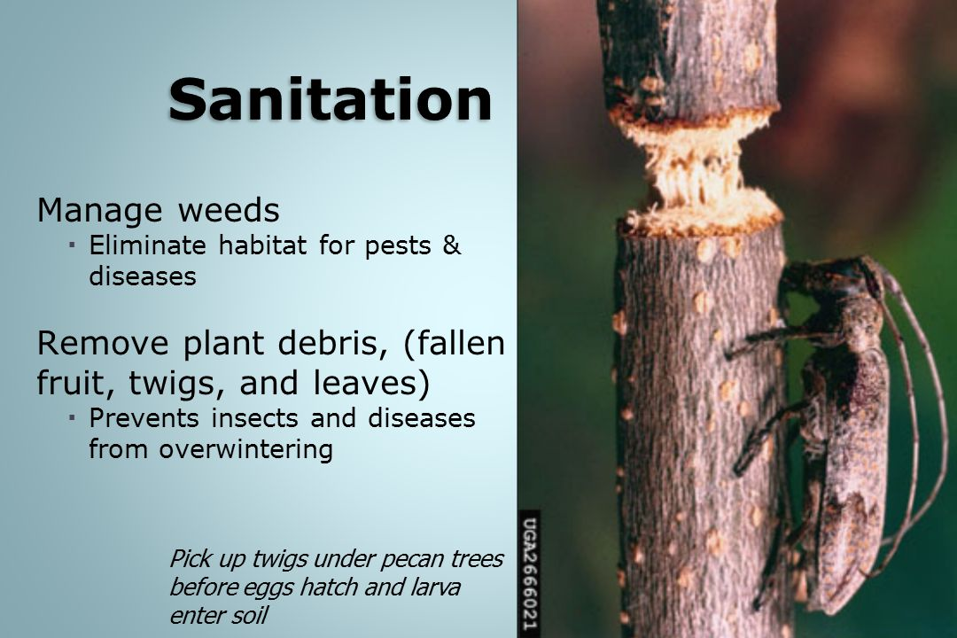 Sanitation Manage weeds