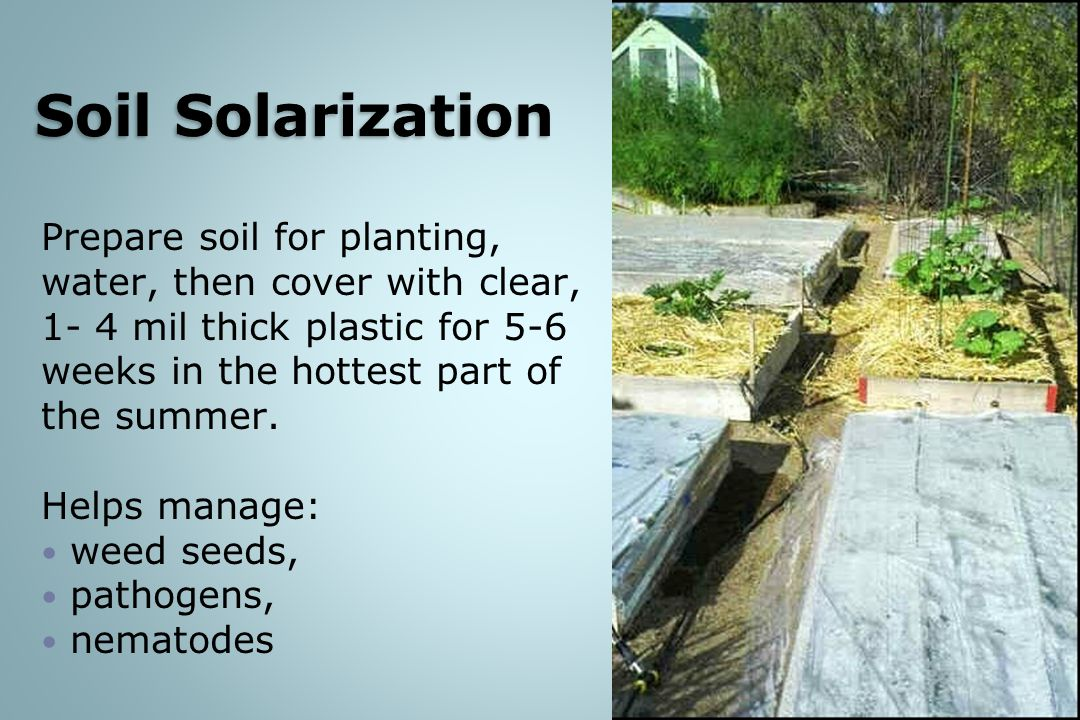 Soil Solarization Prepare soil for planting, water, then cover with clear, 1- 4 mil thick plastic for 5-6 weeks in the hottest part of the summer.