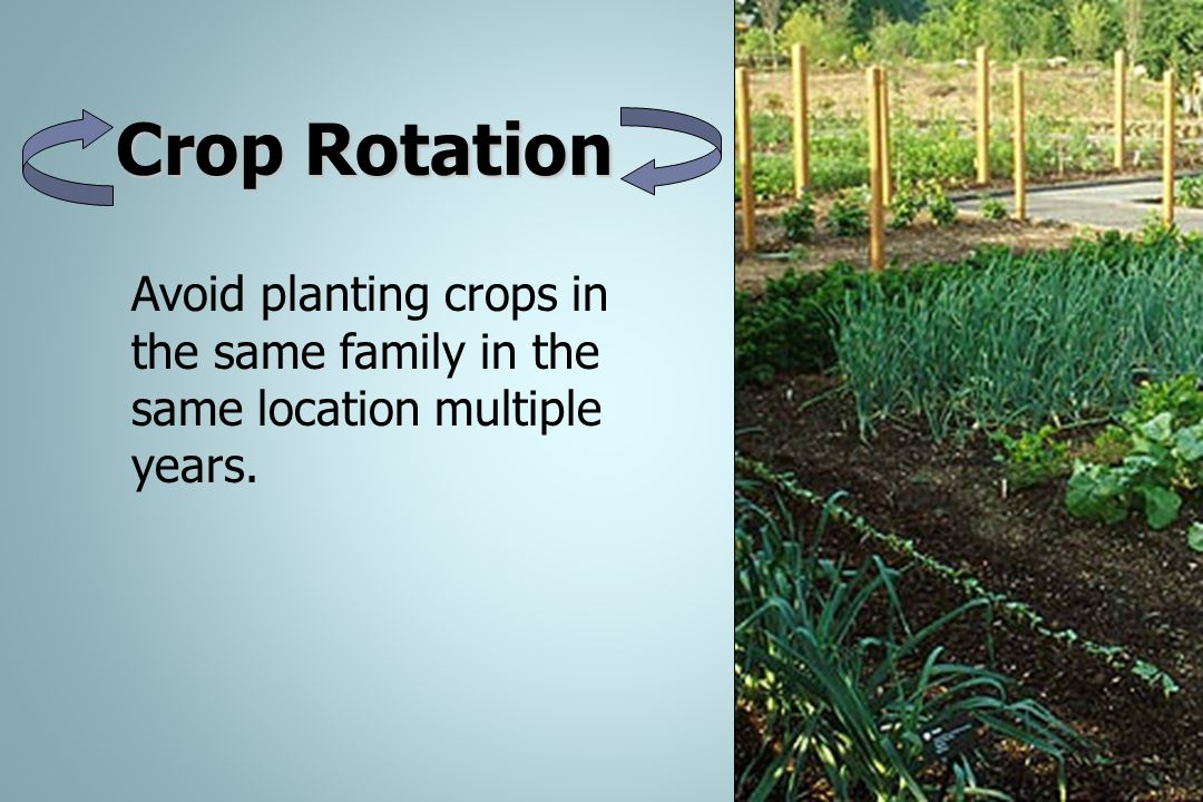 Crop Rotation Avoid planting crops in the same family in the same location multiple years.