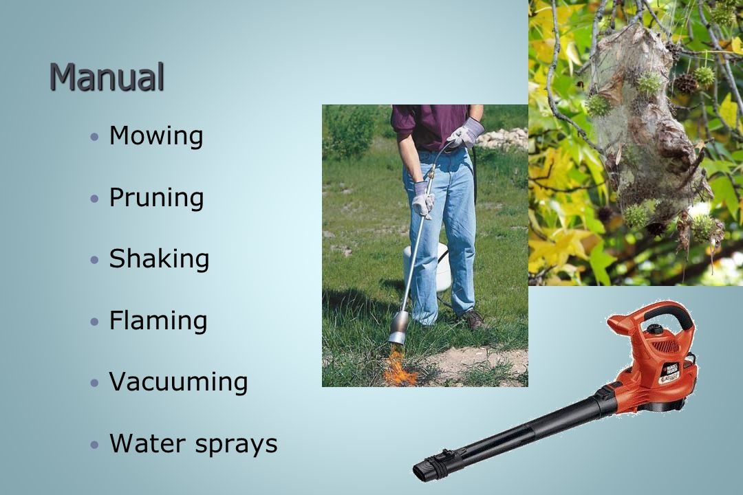 Manual Mowing Pruning Shaking Flaming Vacuuming Water sprays