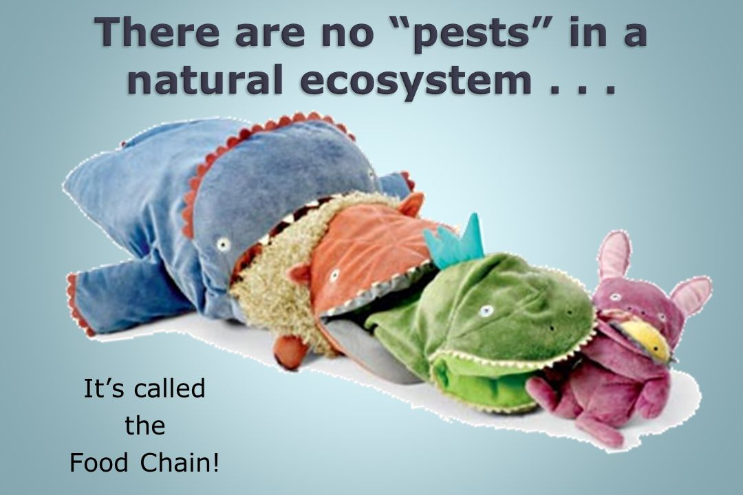 There are no pests in a natural ecosystem . . .