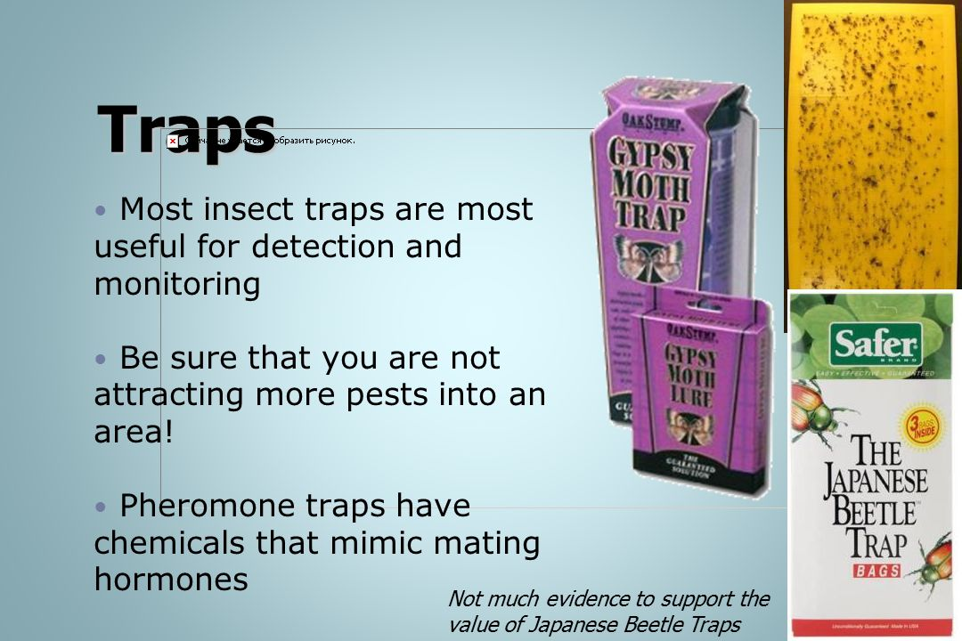 Traps Most insect traps are most useful for detection and monitoring