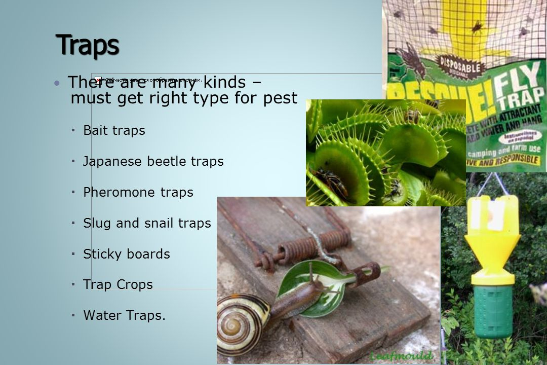 Traps There are many kinds – must get right type for pest Bait traps