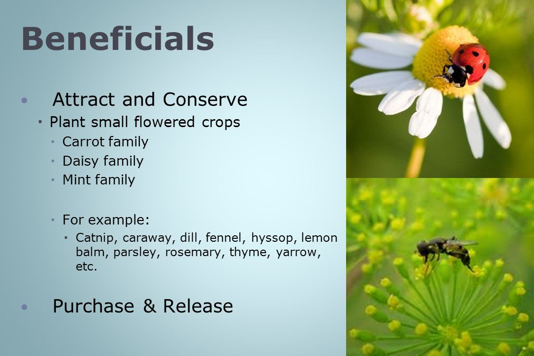 Beneficials Attract and Conserve Purchase & Release