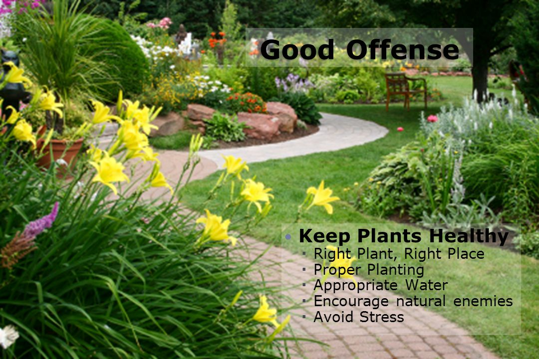 Good Offense Keep Plants Healthy Right Plant, Right Place