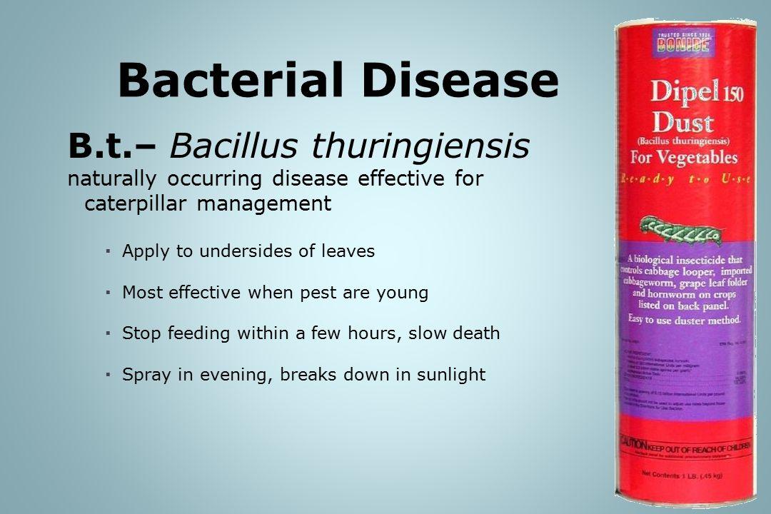 Bacterial Disease B.t.– Bacillus thuringiensis