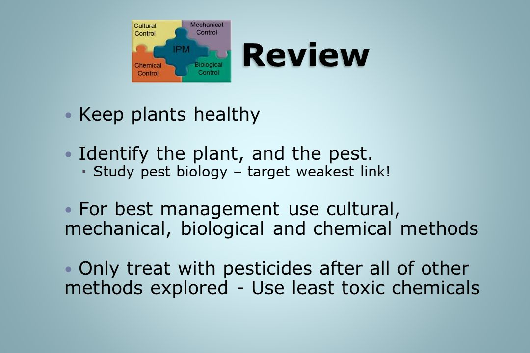 IPM Review Keep plants healthy Identify the plant, and the pest.