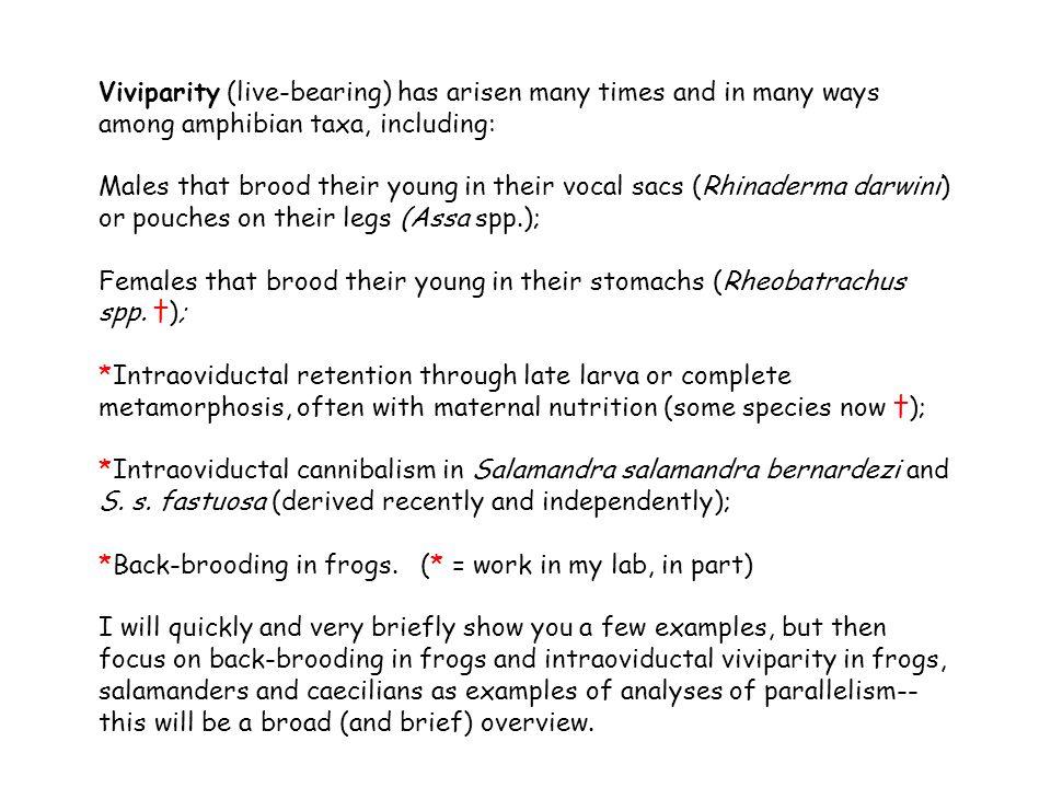 Viviparity (live-bearing) has arisen many times and in many ways among amphibian taxa, including: