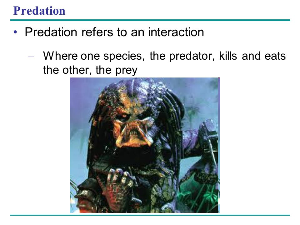 Predation refers to an interaction