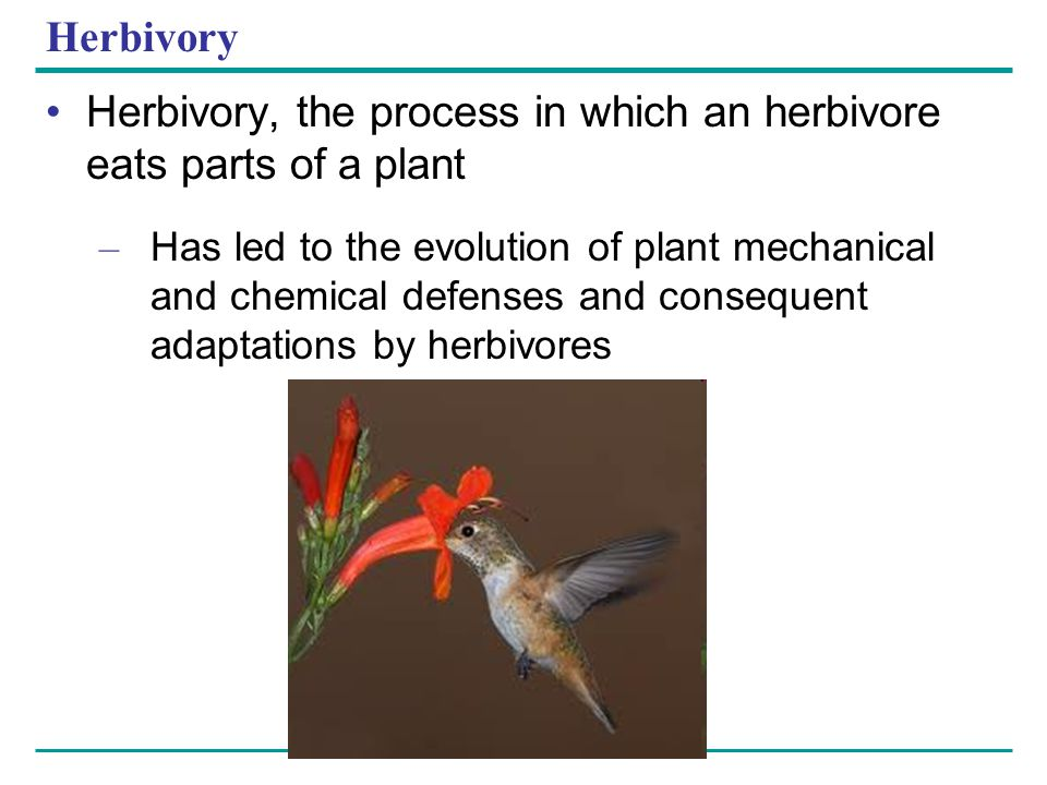 Herbivory, the process in which an herbivore eats parts of a plant