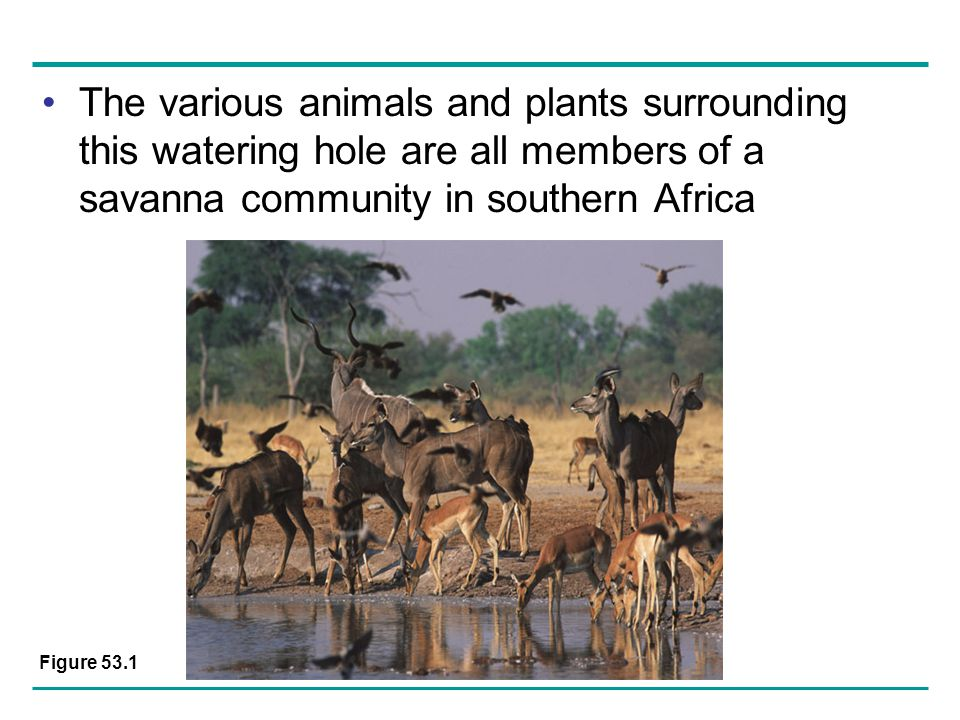 The various animals and plants surrounding this watering hole are all members of a savanna community in southern Africa