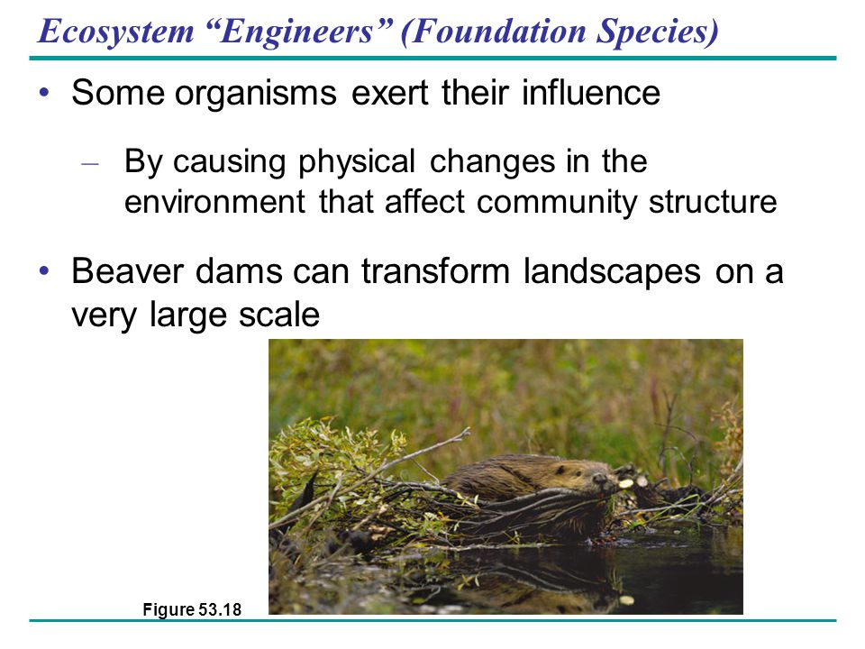 Ecosystem Engineers (Foundation Species)