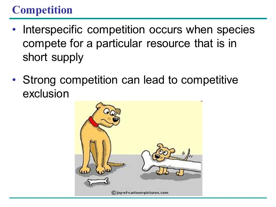 Competition Interspecific competition occurs when species compete for a particular resource that is in short supply.