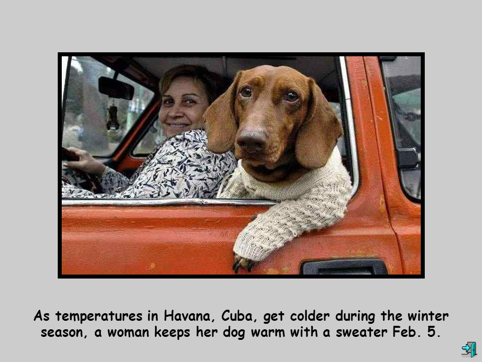 As temperatures in Havana, Cuba, get colder during the winter season, a woman keeps her dog warm with a sweater Feb.