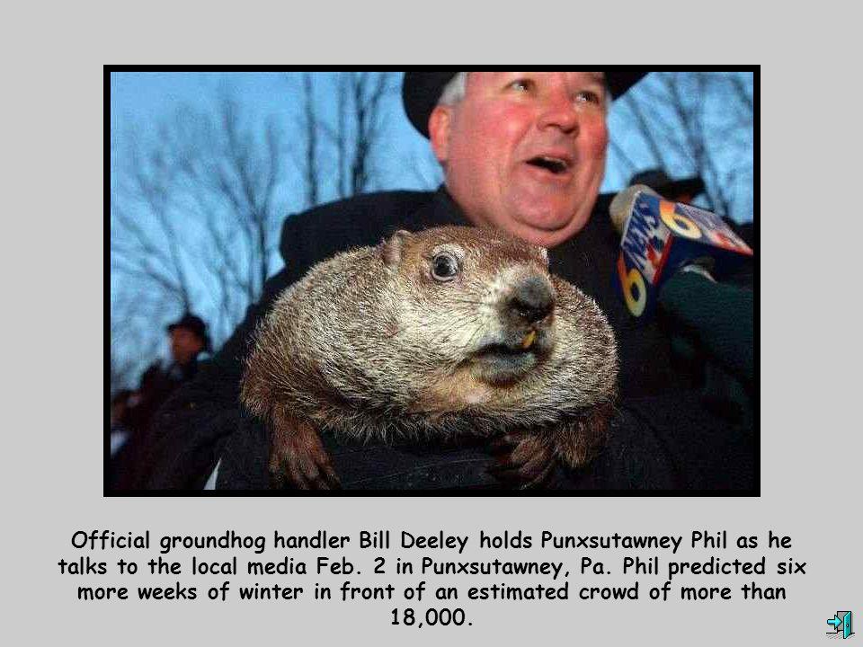 Official groundhog handler Bill Deeley holds Punxsutawney Phil as he talks to the local media Feb.