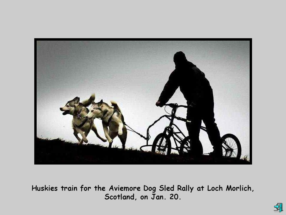 Huskies train for the Aviemore Dog Sled Rally at Loch Morlich, Scotland, on Jan. 20.