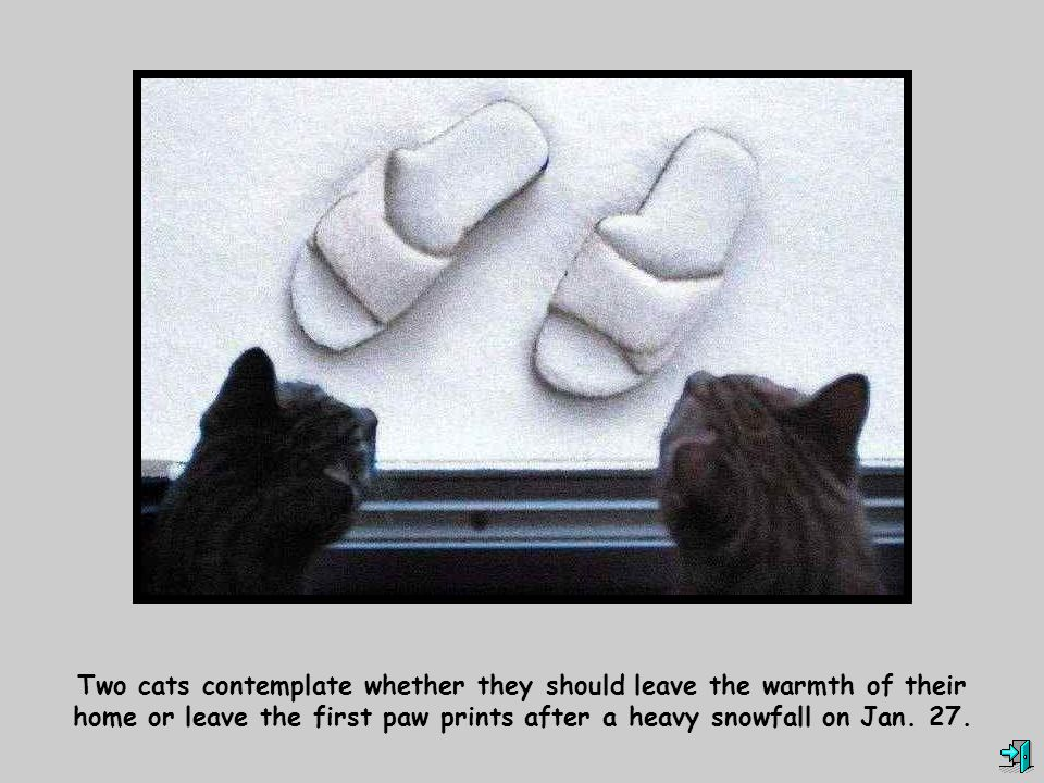 Two cats contemplate whether they should leave the warmth of their home or leave the first paw prints after a heavy snowfall on Jan.
