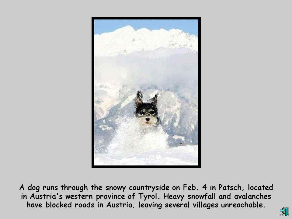 A dog runs through the snowy countryside on Feb