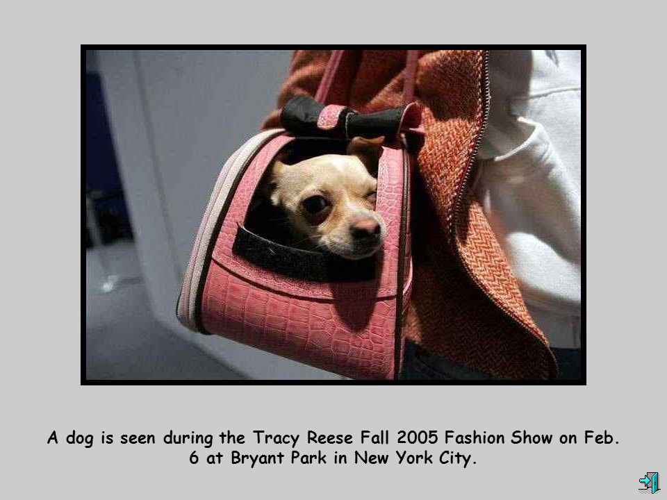 A dog is seen during the Tracy Reese Fall 2005 Fashion Show on Feb