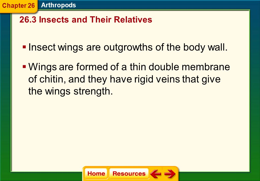 Insect wings are outgrowths of the body wall.